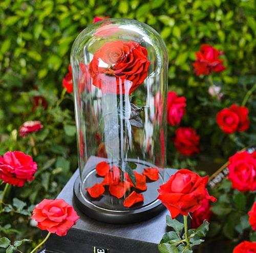 Fleurs sechees stabilisee